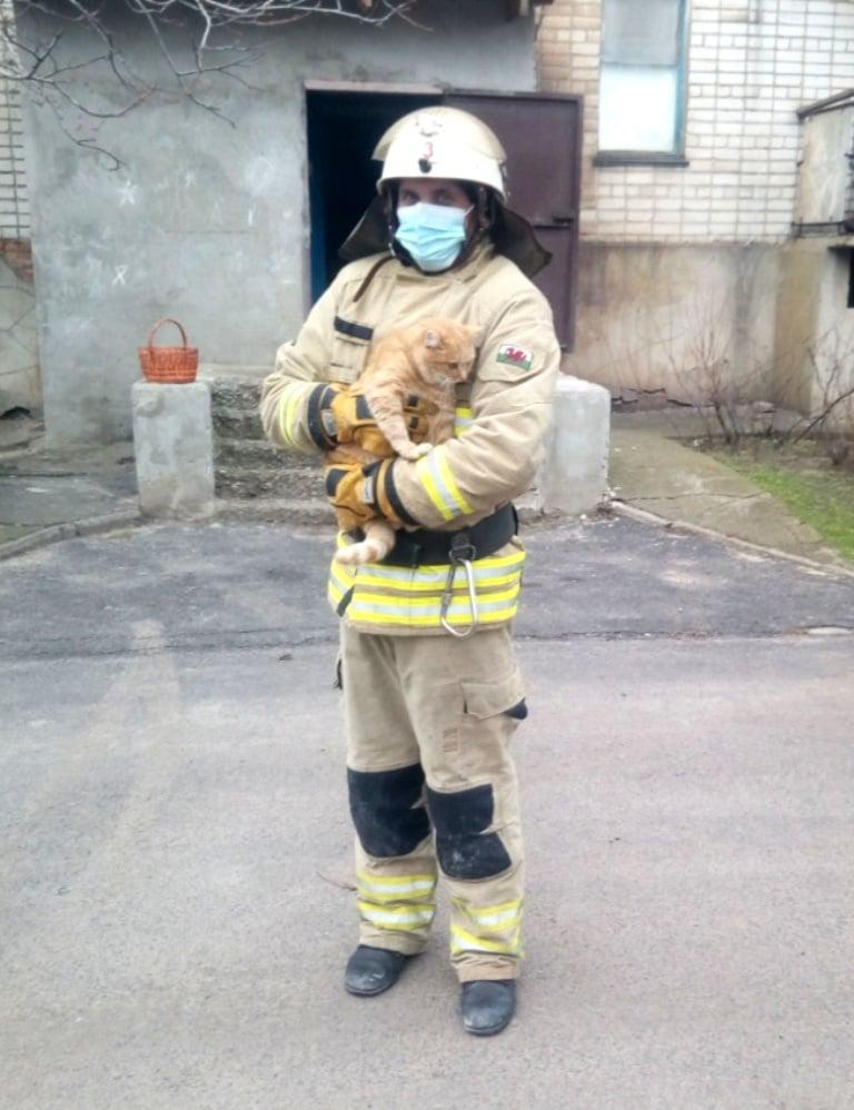 Порятунок кота