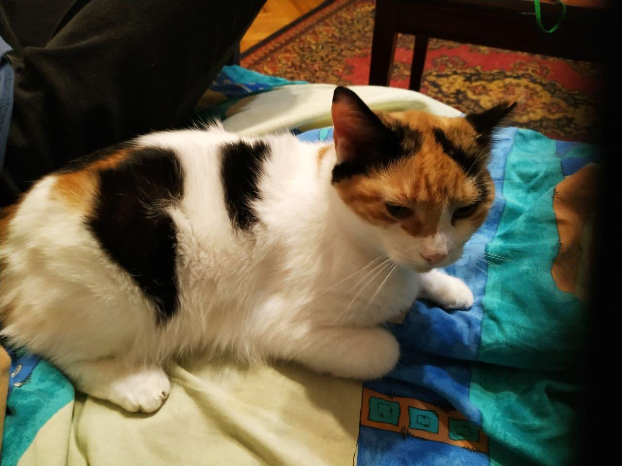 Кішка Євгена Брагара Марта