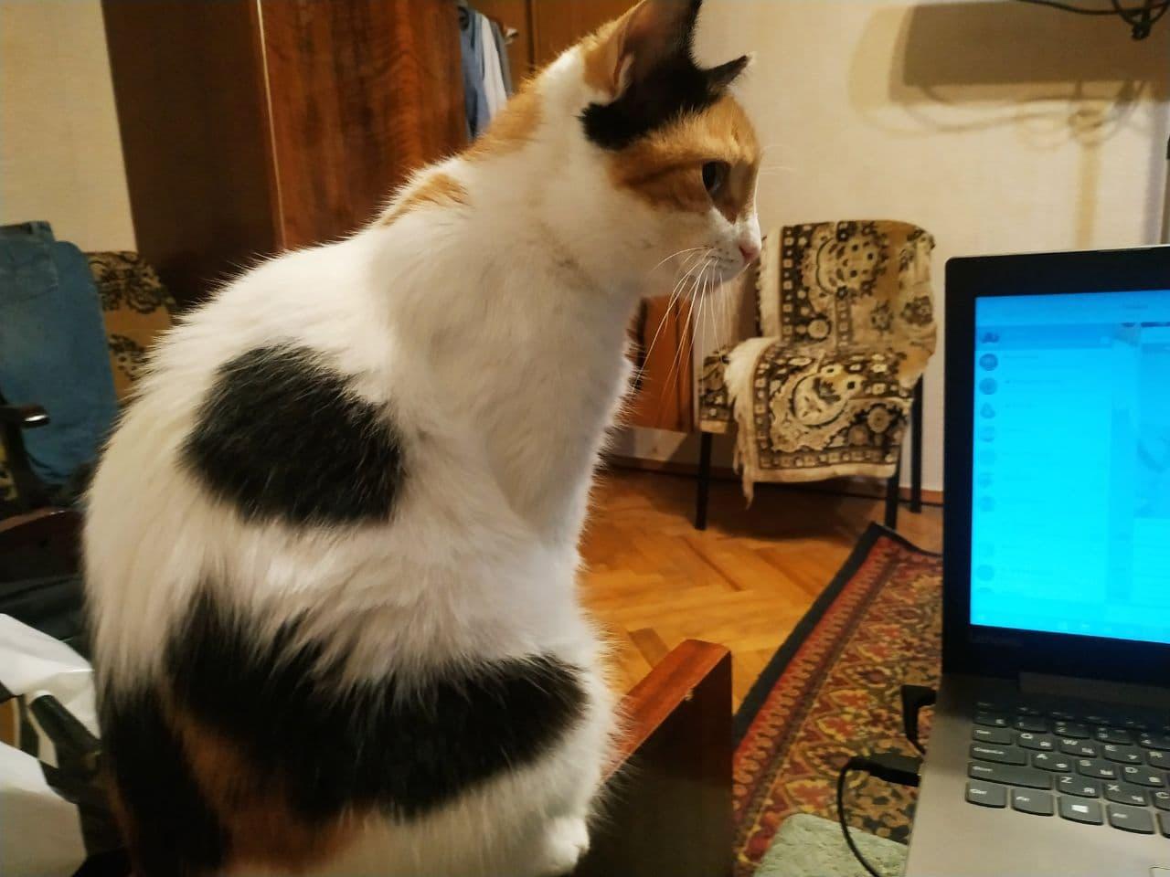 Кіт Брагара