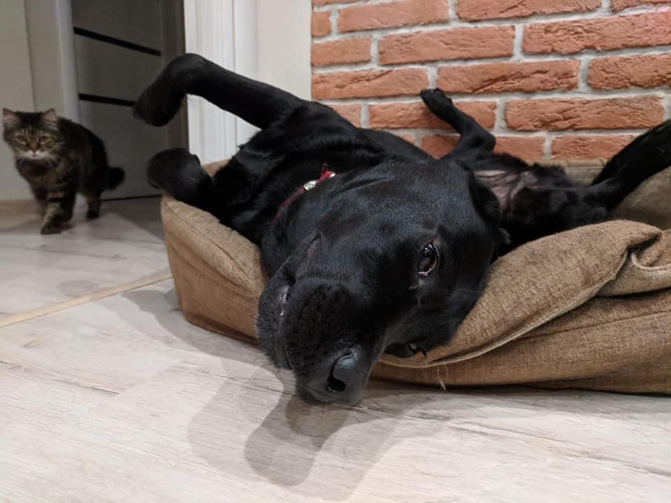собака Устінової